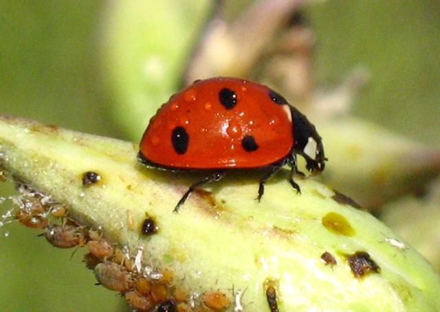 Ladybug Snow Canyon State Park